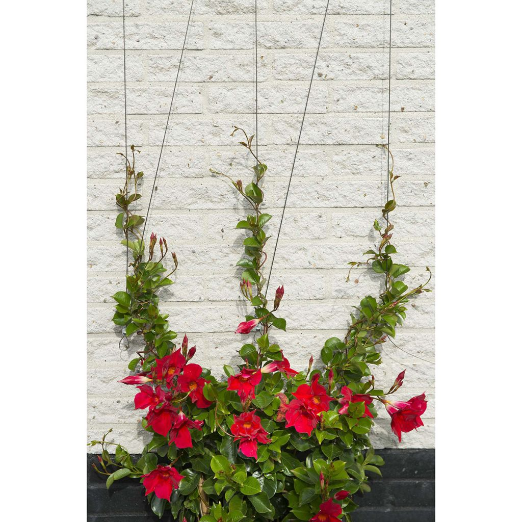 Nature Spaljéset för klätterväxter 6040760